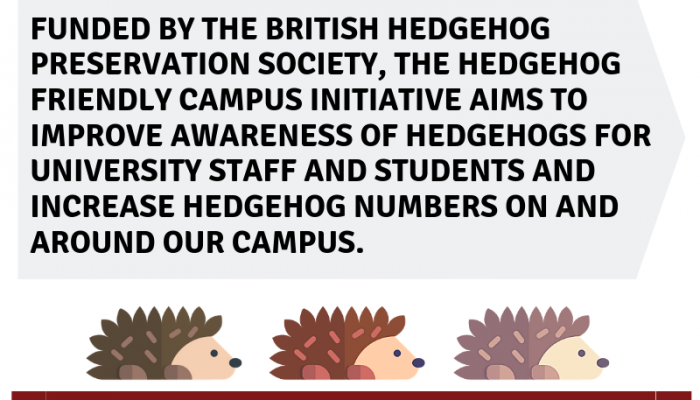 Hedgehog poster