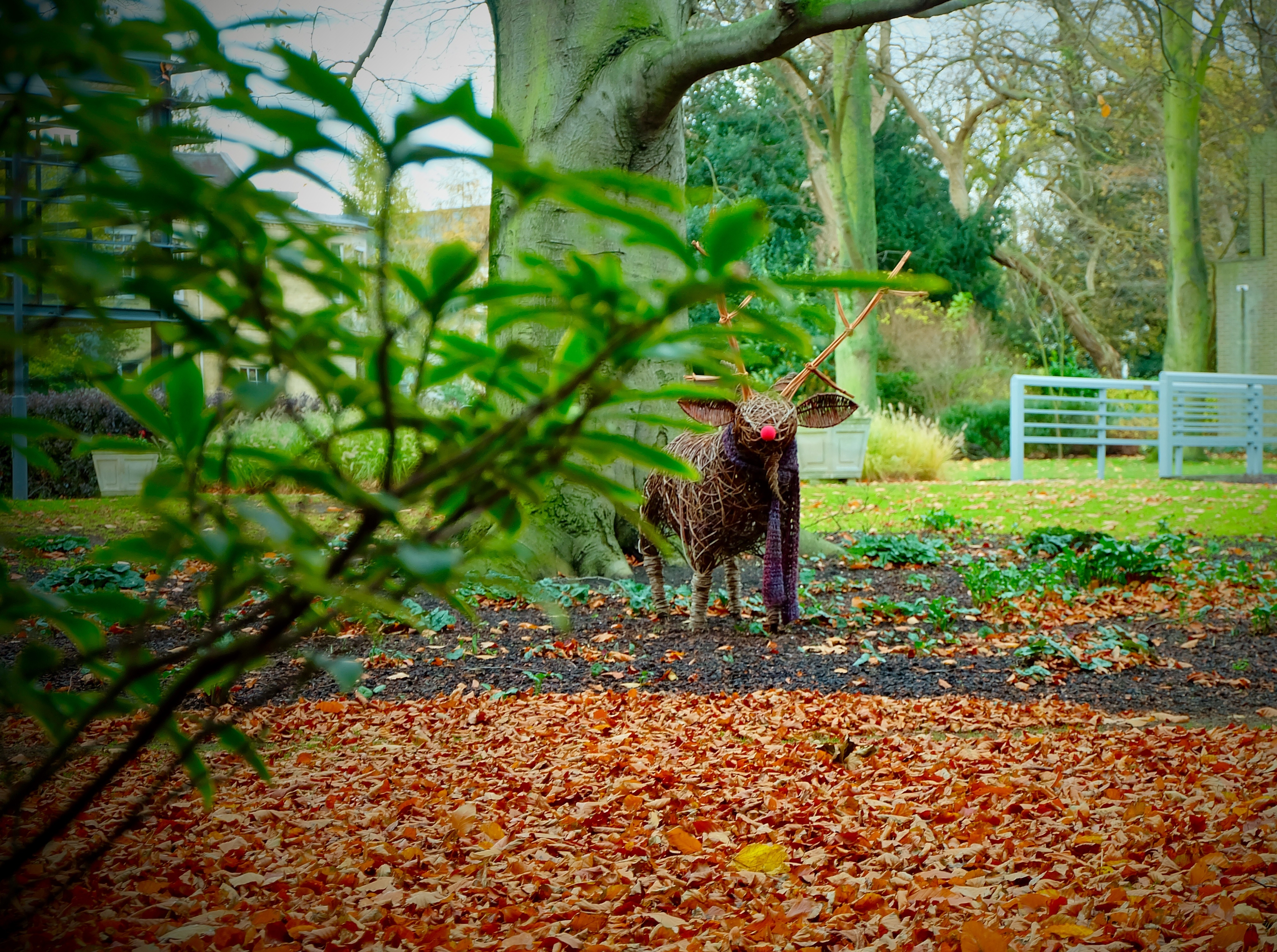 Billy the Goat in the autumn leaves
